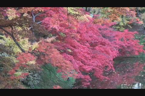 弘前公園紅葉