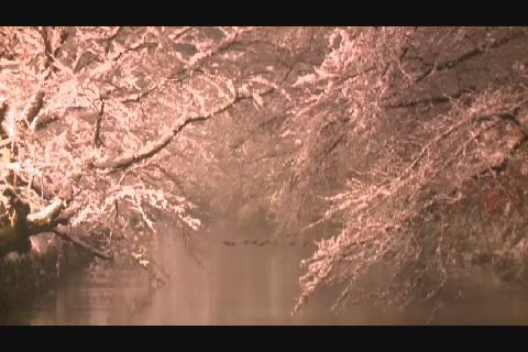 冬に咲くさくら