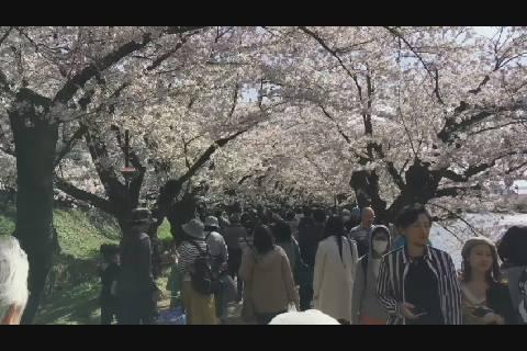 桜より人39万人