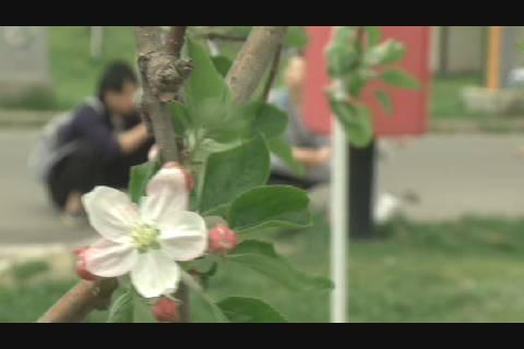 りんご花まつり2019