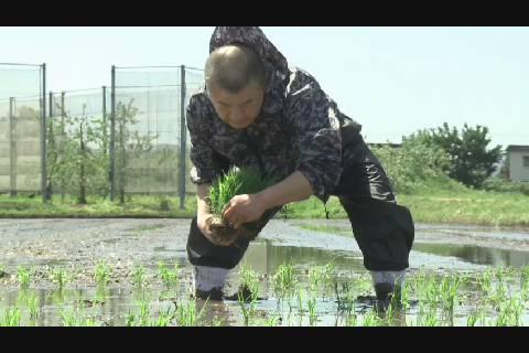 ムツニシキ田植え