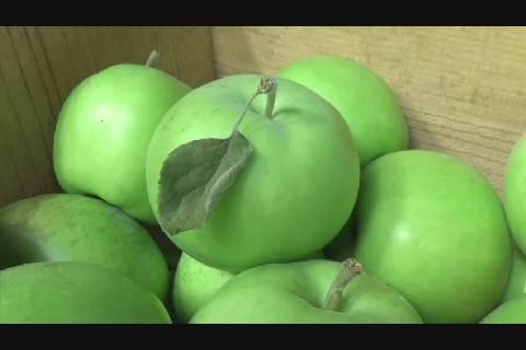 りんご開市2019
