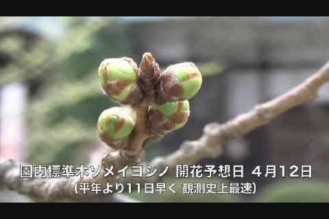 弘前公園桜開花予想2020-3