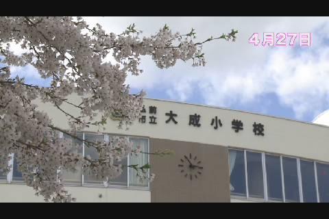 大成小学校の桜