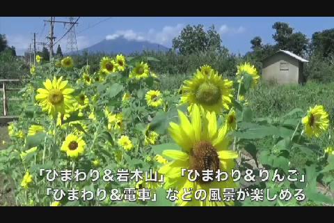 松木平駅ひまわり