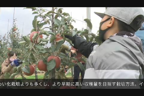 高密植栽培園地収穫